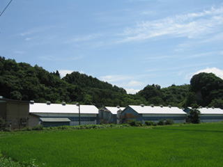 森本ファーム斗内農場